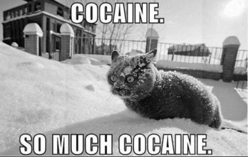 cocaine cat