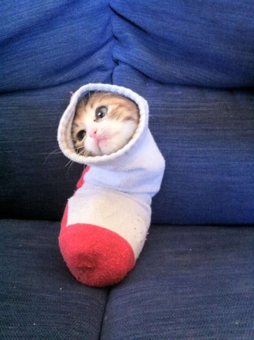 sock kitty