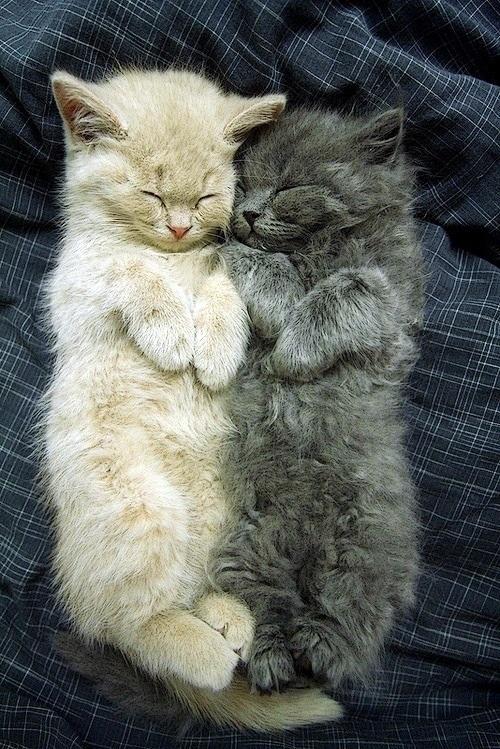 fluffy cuddles