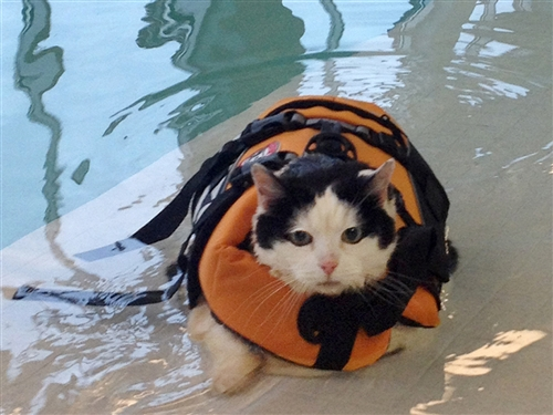 swimming kitty