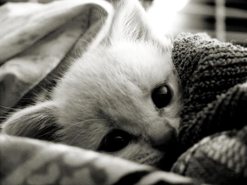 cuddleface