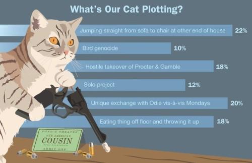 Cat Plot