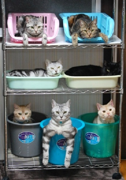 how to organize cats
