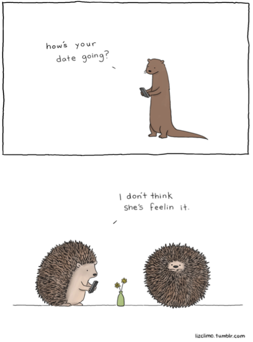 hedgies