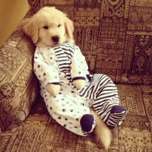 puppy pjs