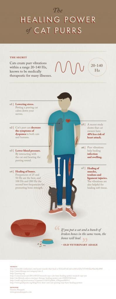 healing power of cats