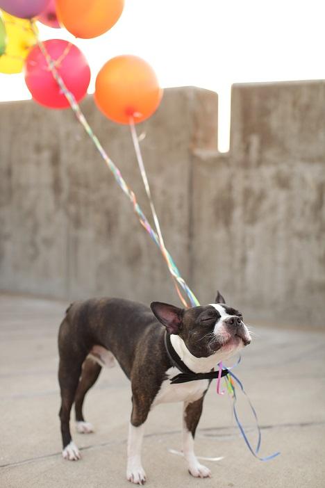 I haz a balloons.