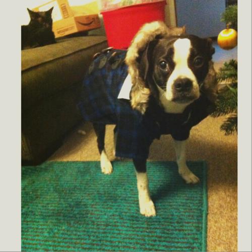 Frank's coat