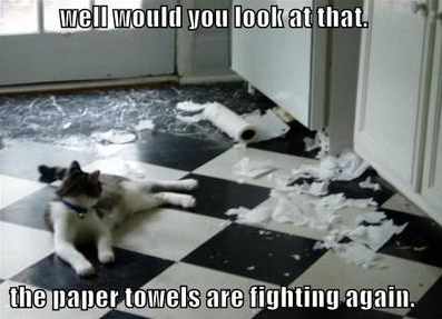 fighting paper towels
