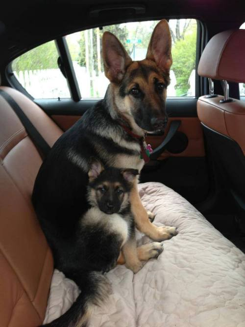 safety seat