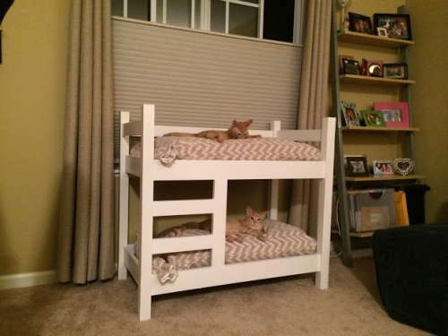 kitty bunkbeds