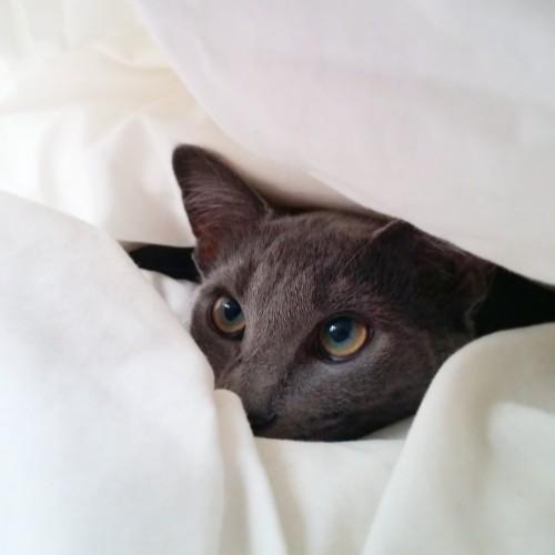 dem eyes