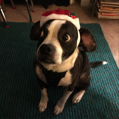 Frankenweenie is ready for Christmas